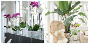Air purifying plants safe for cats