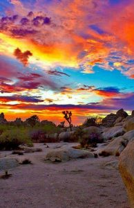 Joshua Tree National Park California Sunset