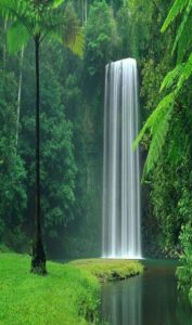 Millaa Millaa Falls, located in Queensland, Australia, is somewhere you really need to add to your bucket list!