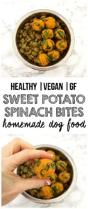 This vegan dog food recipe is one your dog will surely LOVE!
