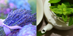 These 9 pest controlling plants are so USEFUL and gorgeous! I love having plants and flowers around as they add such a wonderful aroma to each room. Can't wait to get started!
