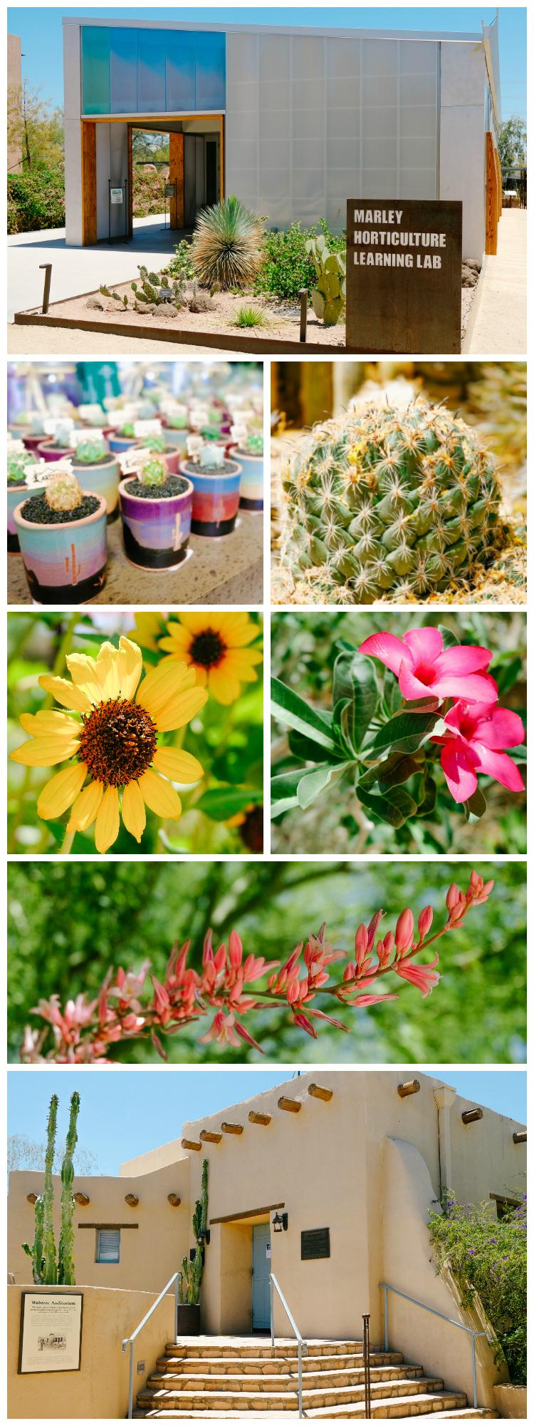 Desert Botanical Garden in Scottsdale AZ