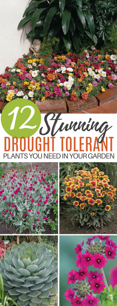 These 12 Stunning Drought Tolerant Flowers & Plants Will Make Your Garden Gorgeous Even if You Live in Dry Desert Weather!