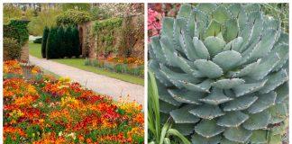12 drought tolerant plants
